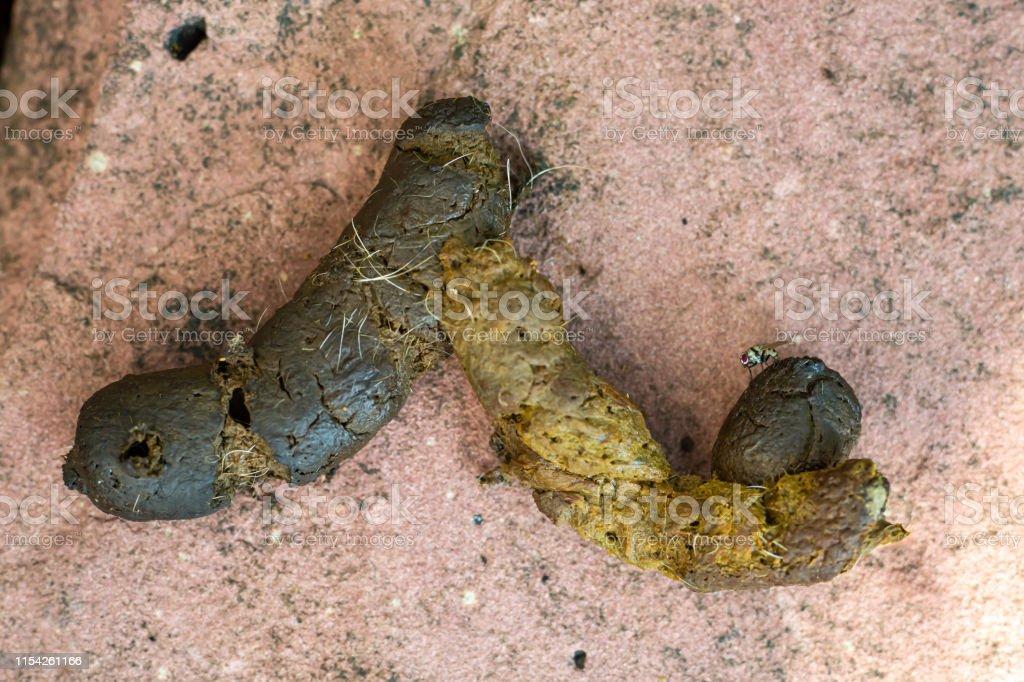 larvas en la caca