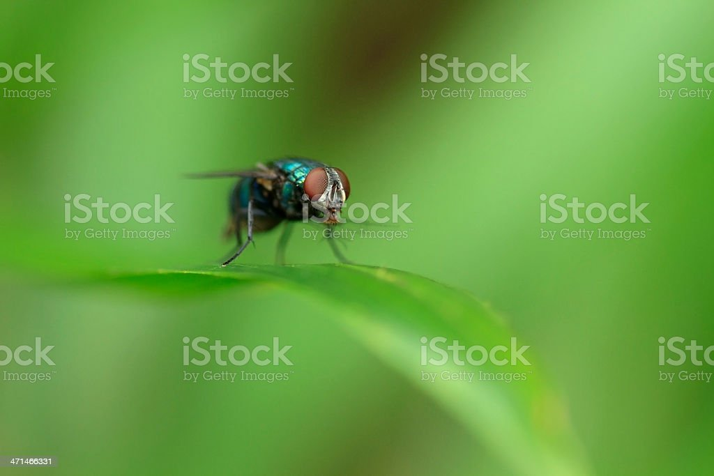 Housefly on  green grass. stock photo