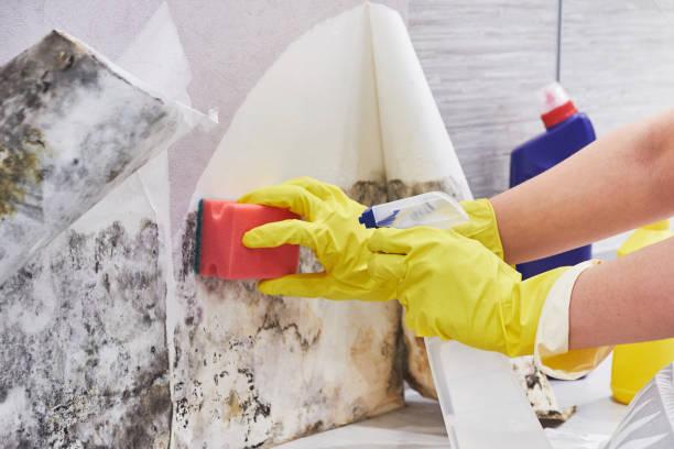 haushälterin die hand mit handschuh reinigung schimmel von wand mit schwamm und sprühflasche - farbe gegen schimmel stock-fotos und bilder