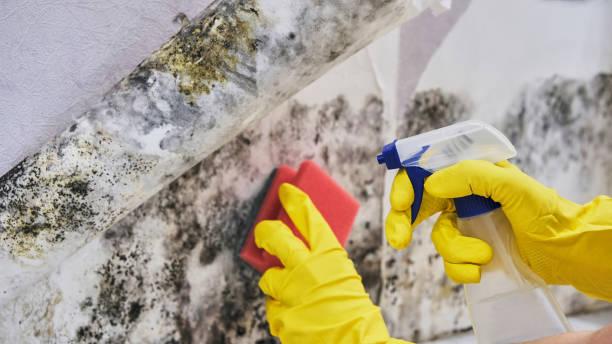 de huishoudster hand met handschoen schoonmaken schimmel van muur met spons en sproeiflacon - meeldauw stockfoto's en -beelden