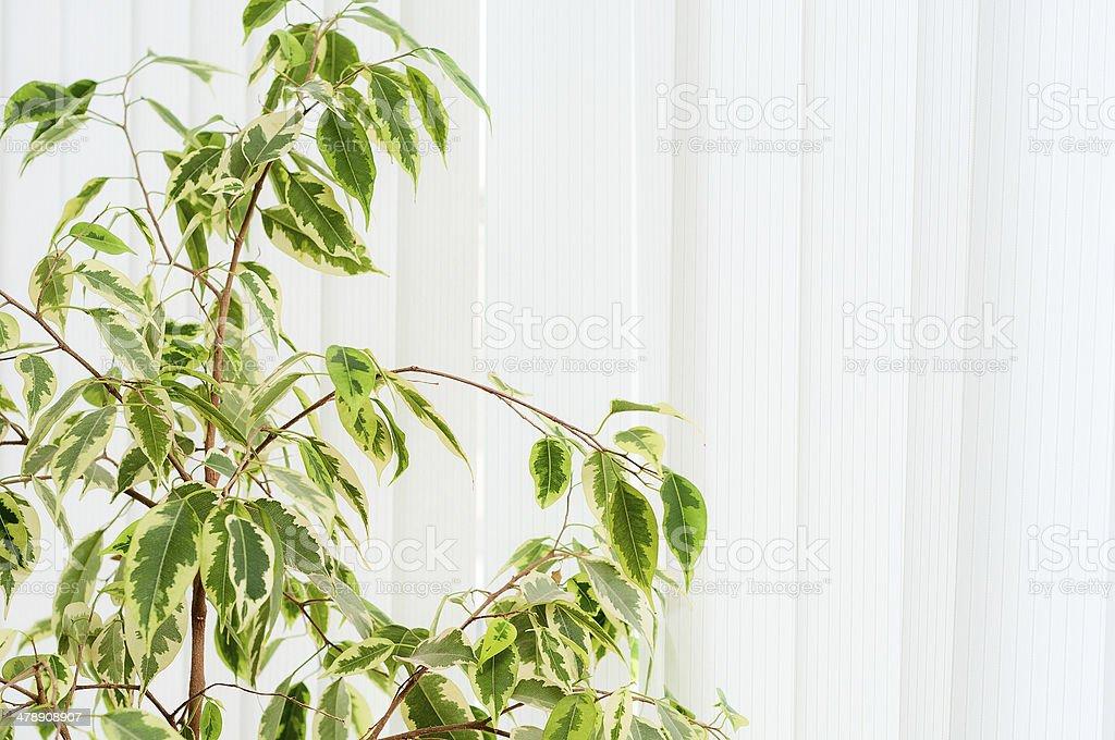 Комнатное растение против окна с жалюзи и стоковое фото
