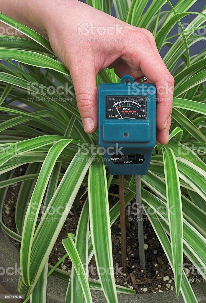 Houseplant Care stock photo