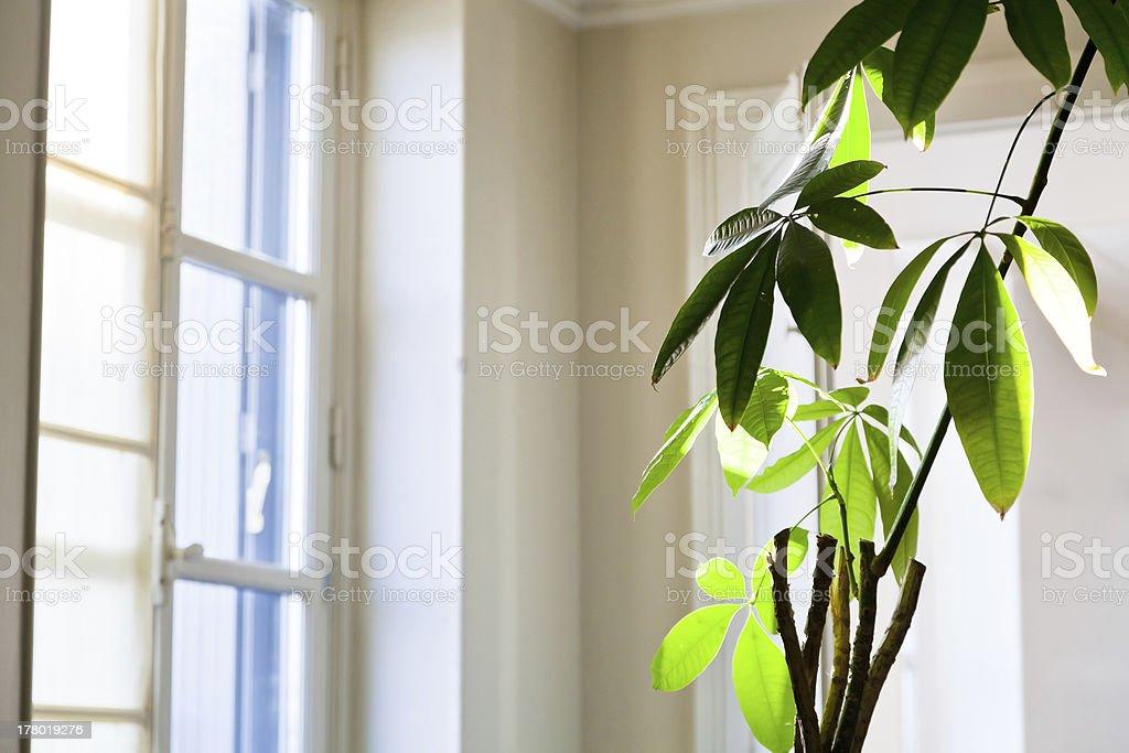 houseplant in white flat royalty-free stock photo