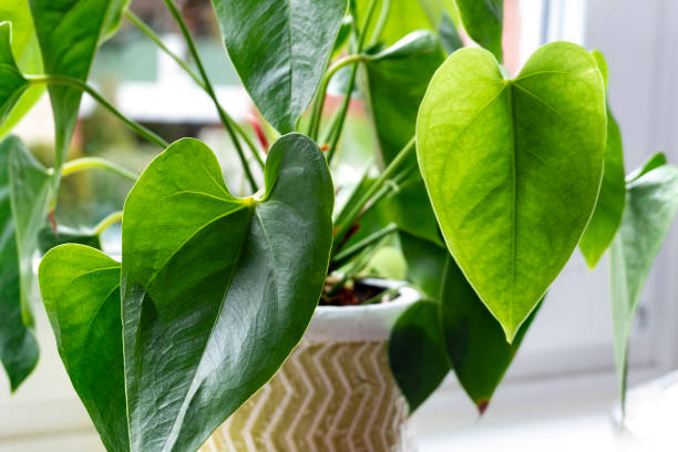 plant op de sill - kamerplant stockfoto's en -beelden