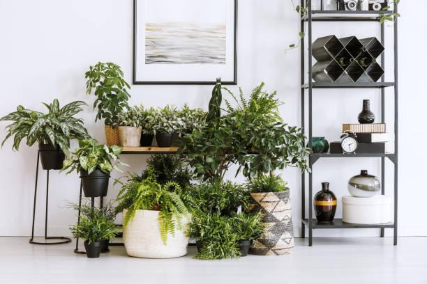 houseplants ve raf - plants stok fotoğraflar ve resimler