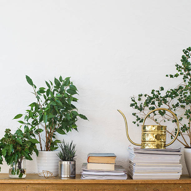 Houseplants, books, pile of journals and watering can Houseplants, books, pile of journals and watering can arranged on the wooden shelf houseplant stock pictures, royalty-free photos & images