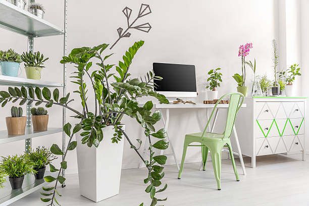 Houseplants in a bright, minimalist interior stock photo