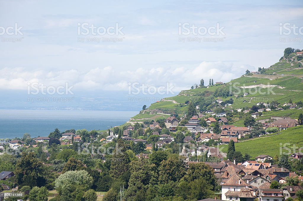Houses amidst Vineyards stock photo