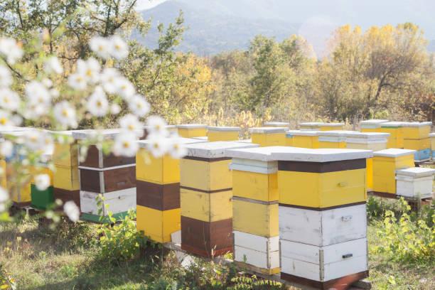 häuser für die bienen in der natur - bienenstock stock-fotos und bilder