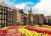 Typical dutch houses over tulips, Amstardam, Netherlands