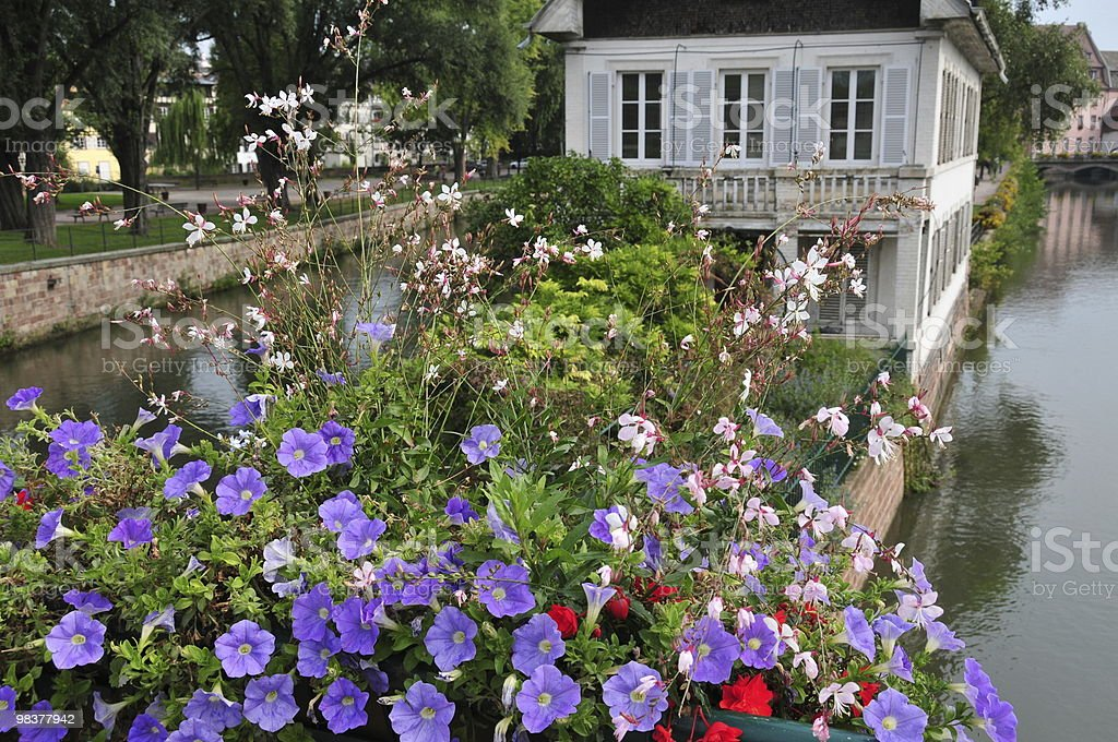 Houses on Canals with Flowers in Foreground royalty-free stock photo