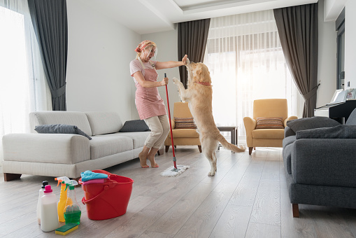 Housewife and her dog mopping on the floor of a room during housework.