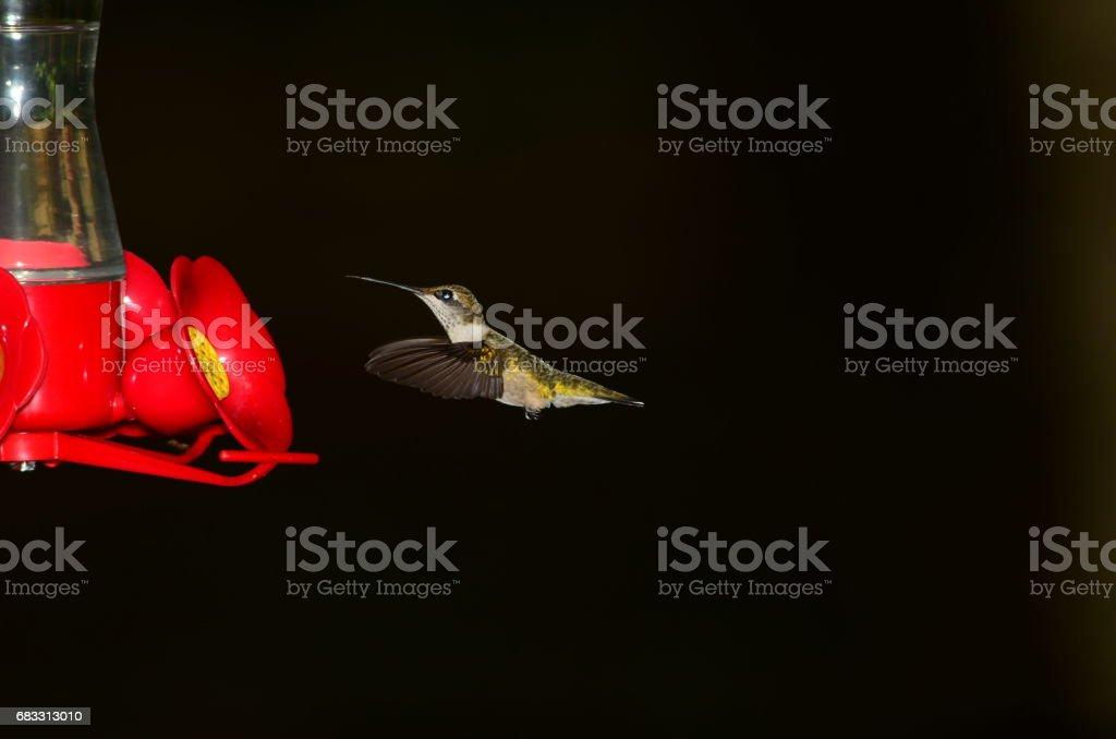 Hovering Hummingbird looking up slightly next to feeder royalty free stockfoto