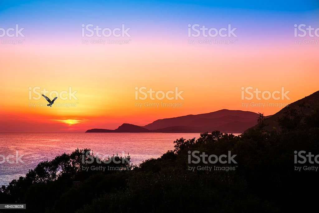 hovering raptor with a beautiful sunset over the ocean stock photo