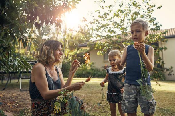 how are the carrots? - mãe criança brincar relva efeito de refração de luz imagens e fotografias de stock