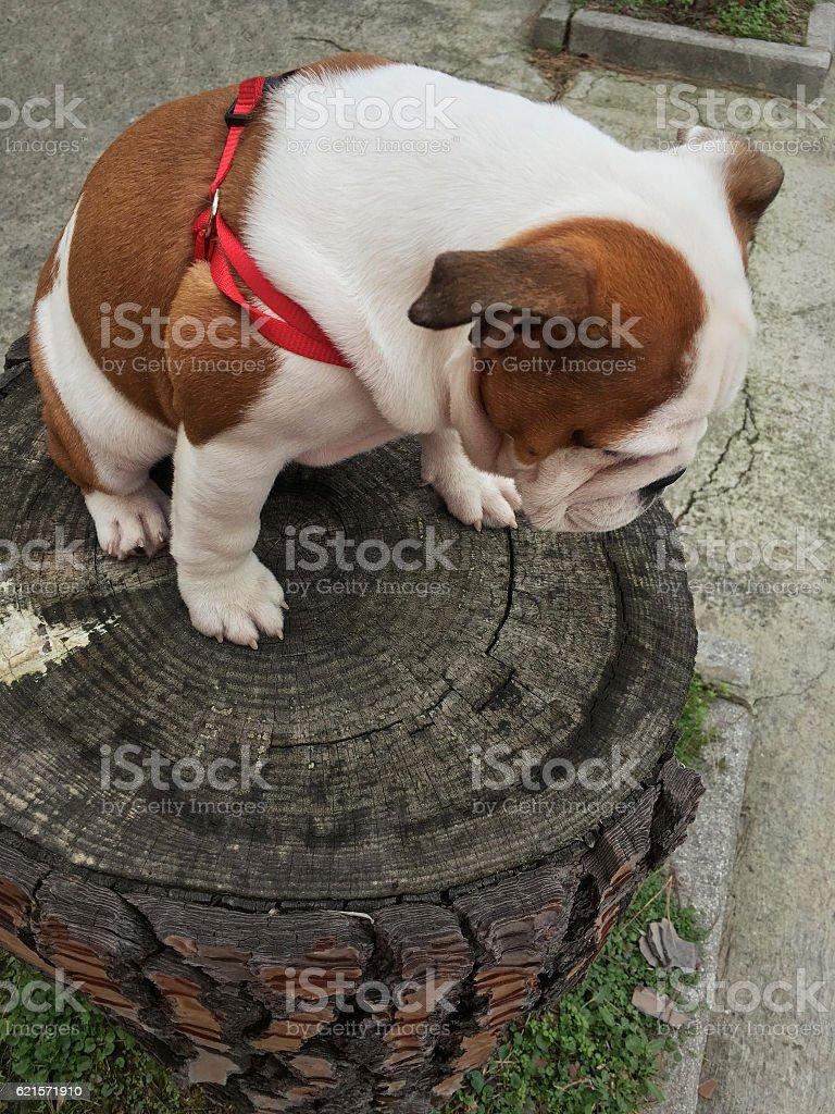 How do I get down here? photo libre de droits
