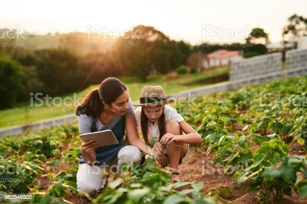 Foto de Como Eles Estão e mais fotos de stock de Adulto
