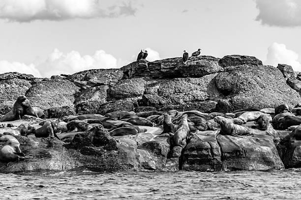 Wie viele Seelöwen? – Foto