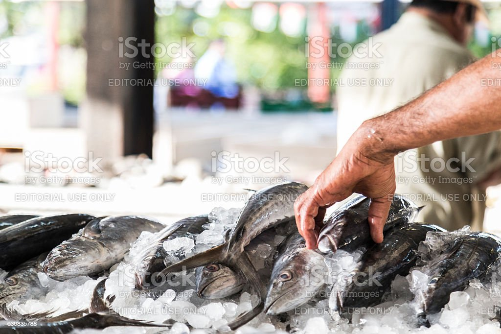 How many Trouts today? stock photo