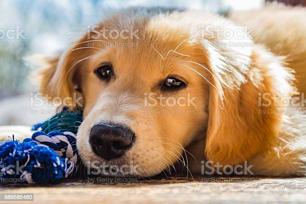 How much is that puppy in the window picture id589585480?b=1&k=6&m=589585480&s=612x612&h=ozgjouduwlswvedqdibdy5qunbygcjgg5fuhaw7ltf0=