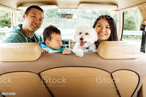 How to travel with baby and dogs picture id804275336?b=1&k=6&m=804275336&s=612x612&h=x vtt6fv lyhb lwlhbkii7d4cn03ddtakkzxppqogg=