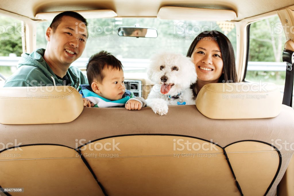 How to travel with baby and dogs stock photo