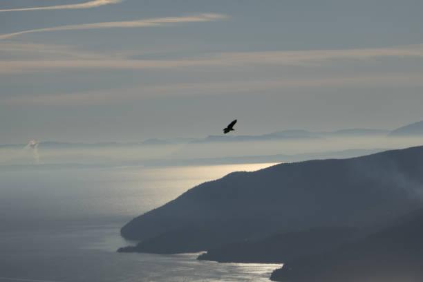 Howe sound eagles picture id1071254026?b=1&k=6&m=1071254026&s=612x612&w=0&h=bgmmu3gk6dlbp5dtwtogo3917dusslzqrs3z05vaxt0=