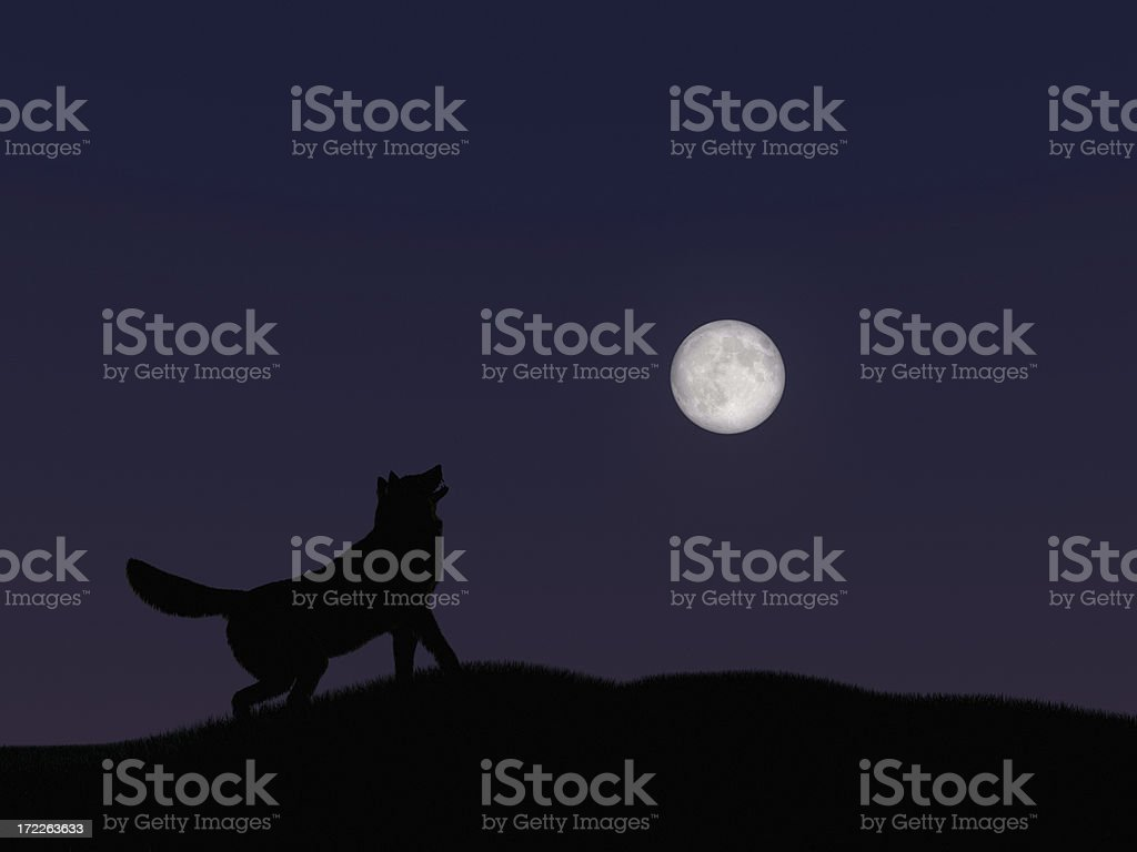 Howling at the Moon XL stock photo