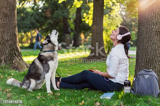 Male Siberian husky sitting on the grass in the park and howling with his owner