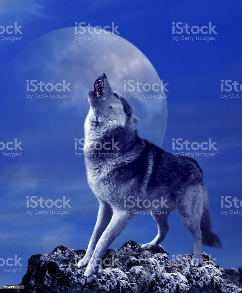 Howling wolf and moon stock photo