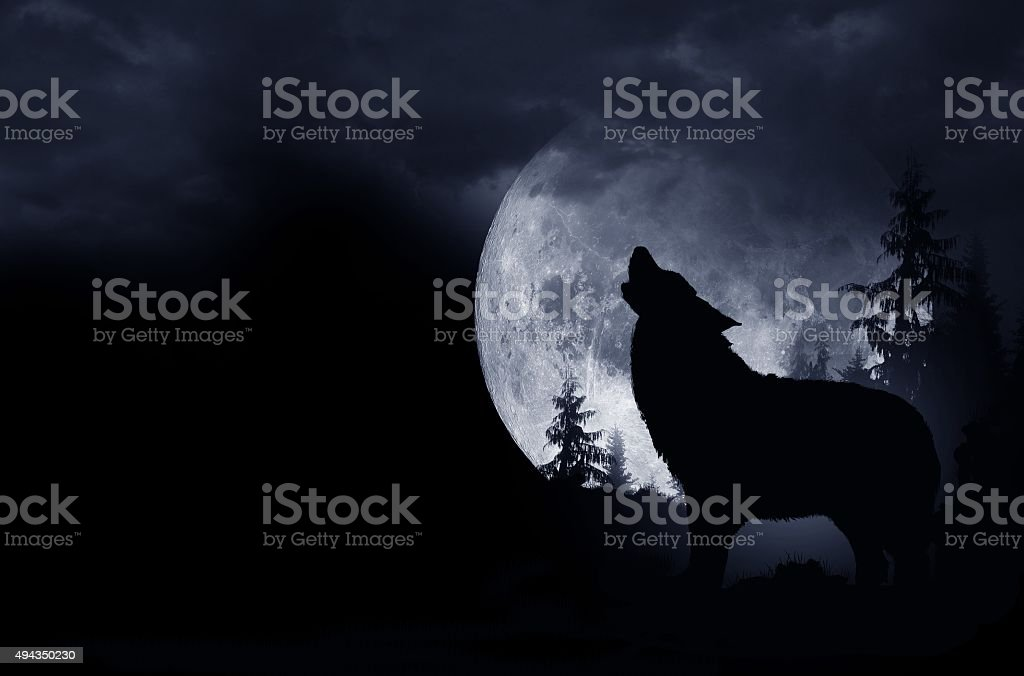 Howling Wolf Background stock photo