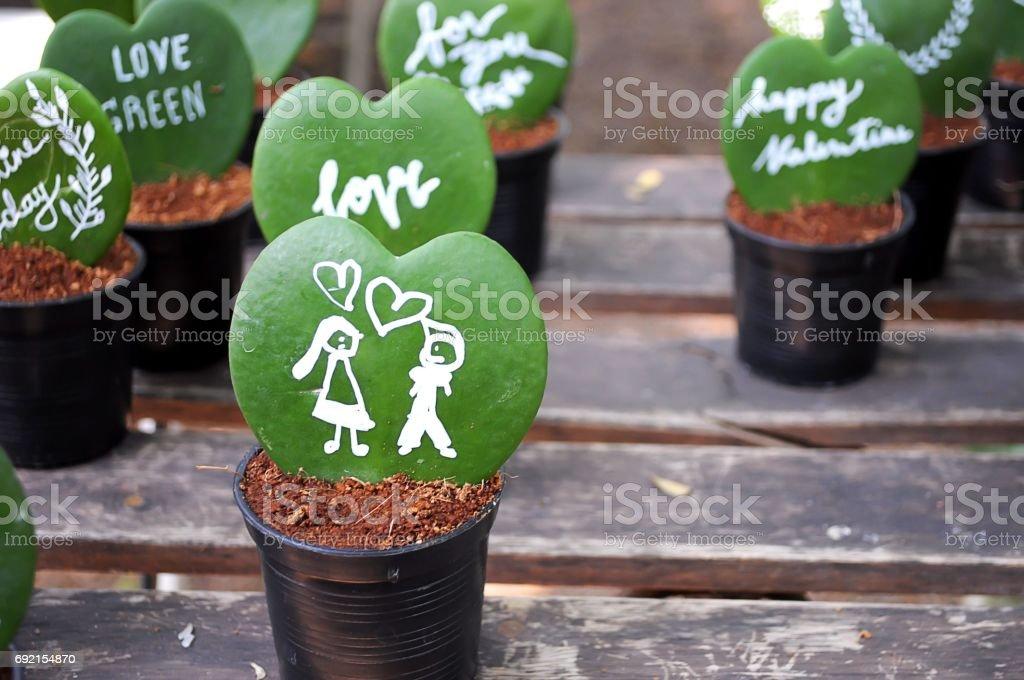 Hoya heart stock photo