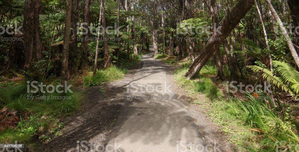Hpuu or Hawaiian Tree Fern stock photo