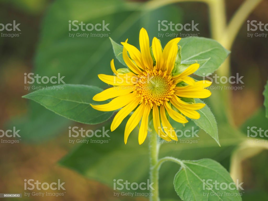https://www.youtube.com/watch?v=TuhZpAKY7qM stock photo