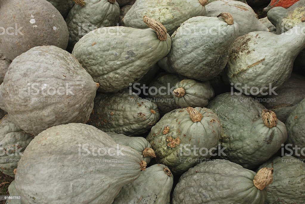 Hubbard Squash royalty-free stock photo