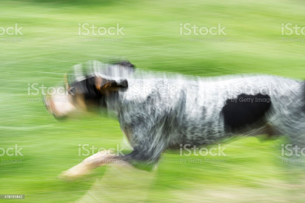 Hubert in Motion stock photo