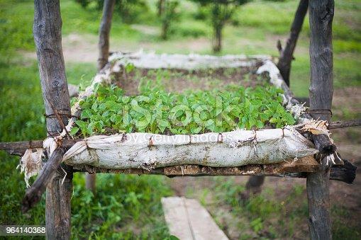 pequeño huerto con tomates pequeños hecho en una cosecha de kenia