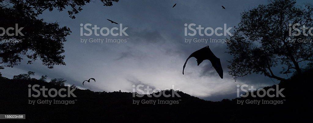 Image result for bats at dusk