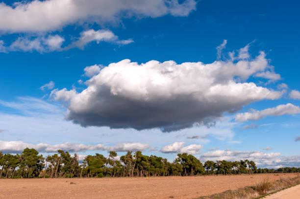 Enorme nube en tierra de pinares. - foto de stock