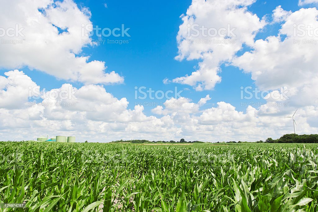 Huge corn field with biogas plant stock photo