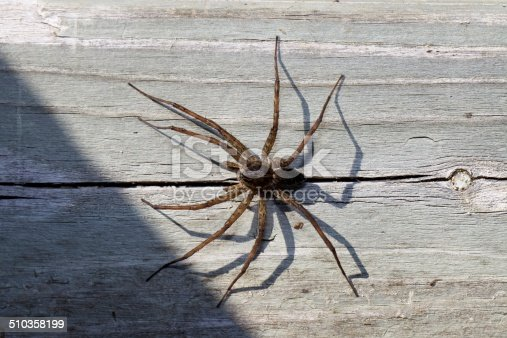 A Dock Spider the size of a golf ball stands guard on the side of a floating dock in Northern Ontario's Muskoka lakes region.