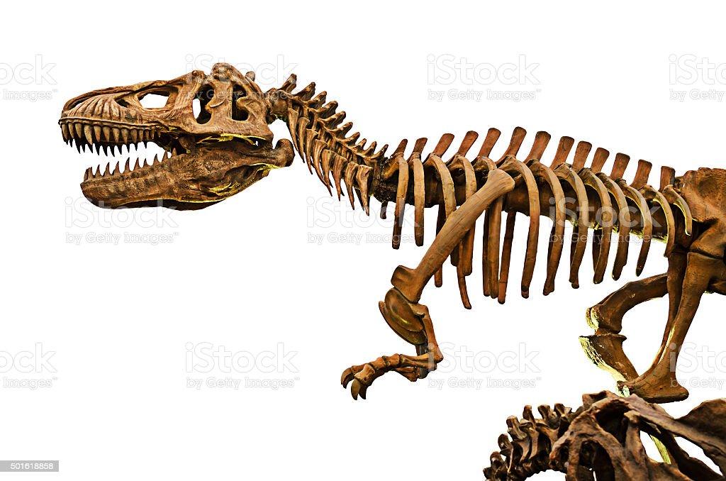 huge dinosaurs skeleton stock photo