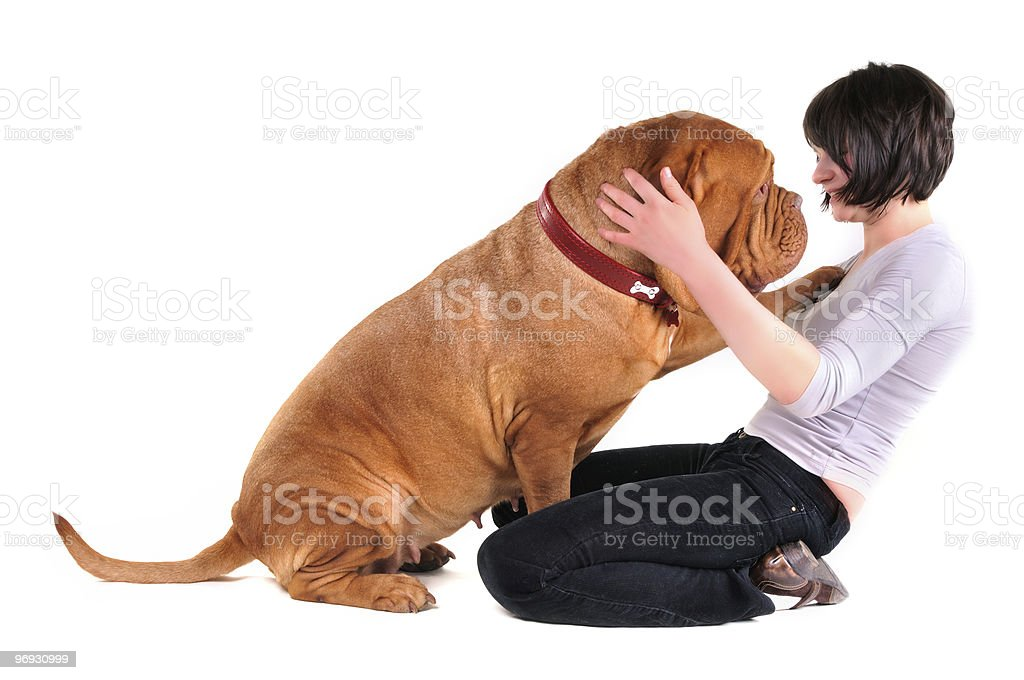 Huge Dog Playing with Her Master royalty-free stock photo
