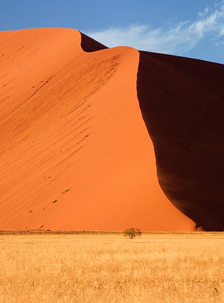 Große dune Baum – Foto
