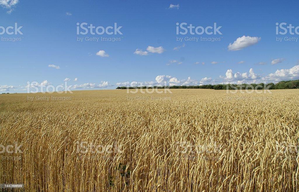 huge farm land royalty-free stock photo