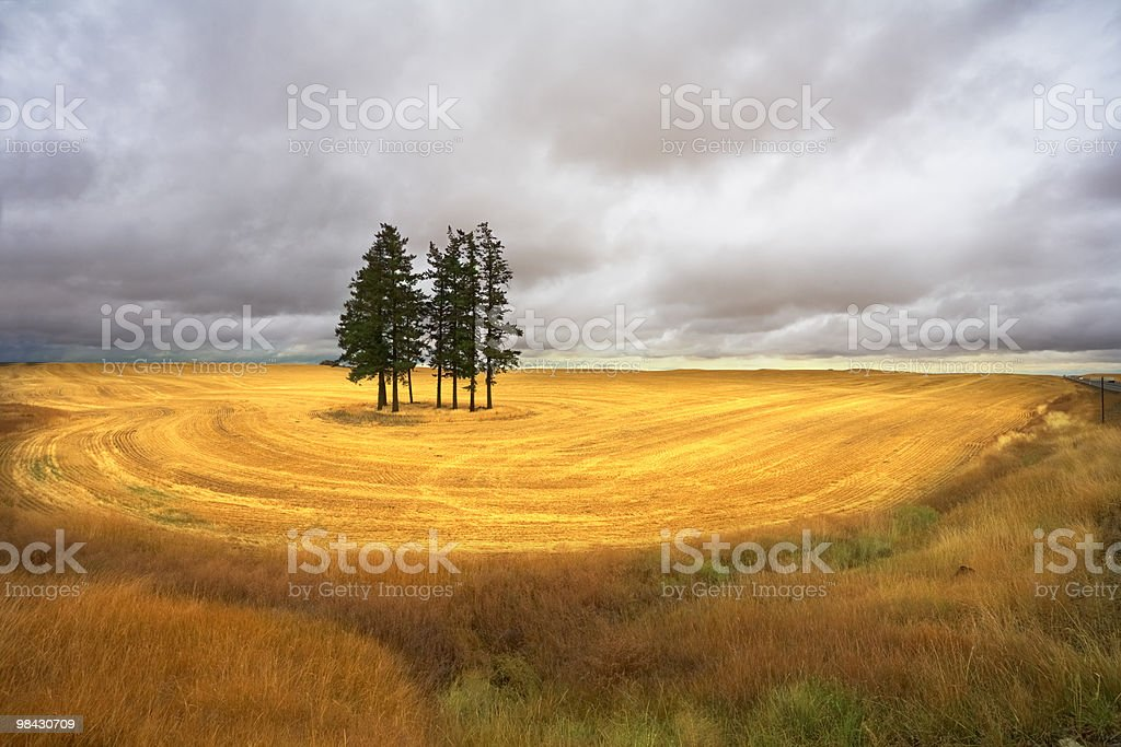 Huge field after a harvest royalty-free stock photo