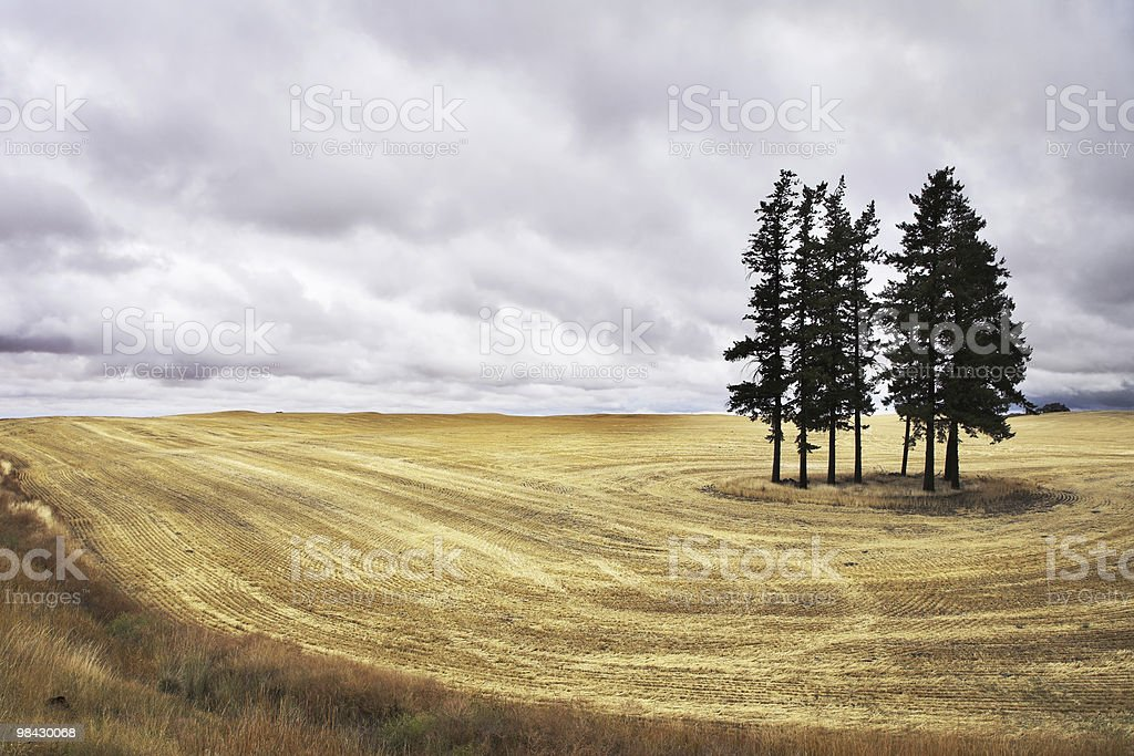 Huge field in state of Montana after a harvest. royalty-free stock photo