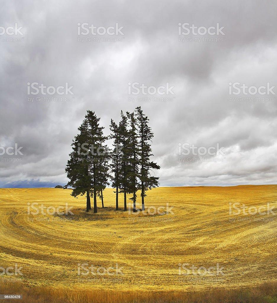 Huge field royalty-free stock photo