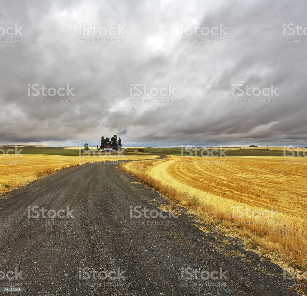Huge fields  of Montana royalty-free stock photo