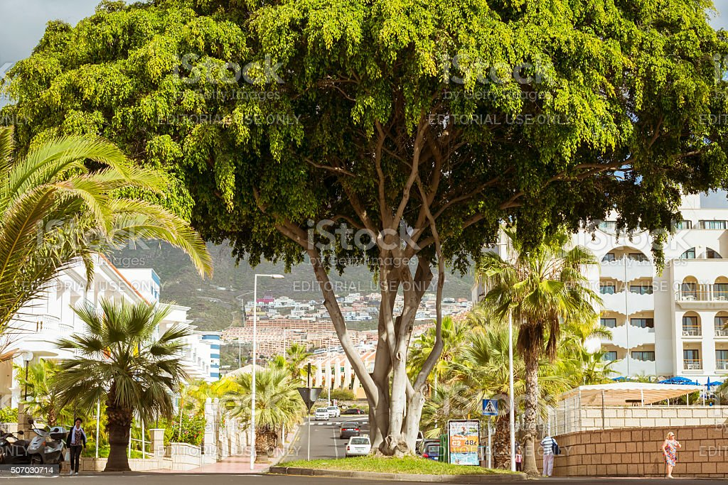 Huge green tree in the flower bed among interchanges stock photo